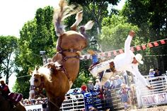 You can't find much more of a caught-in-action sports photo than this one captured at the Augusta (Montana?) Rodeo. As the cowboy in white sails off toward the ground, this bucking dark golden brown palomino horse is the obvious star of the moment! -DdO:) http://www.pinterest.com/DianaDeeOsborne/gorgeous-horses-more/