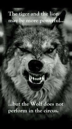 My spirit animal is the wolf. I am Christian but I believe in having sprit animals and I'm proud to be a wolf. Beautiful Creatures, Animals Beautiful, Cute Animals, Beautiful Wolves, Wild Animals, Wolf Quotes, Me Quotes, Wolf Pack Quotes, Great Quotes