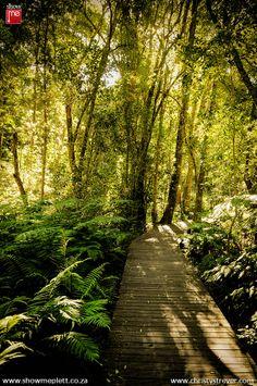 The stunning pathways through the Tsitsikamma forest.   ShowMe Plettenberg Bay www.showmeplett.co.za Christy Strever Photography www.christystrever.com  #photography #Plett #forest #gardenroute #tsitsikamma #walks #showme