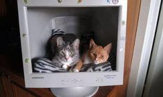 Cat Nest Old Monitor