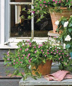Goofproof Outdoor Plants