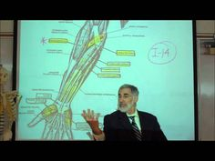 This is Part 3 of 5 Video Lectures on the Skeletal Muscle Groups of the Human Body by Professor Fink. In this Video Lecture, Professor Fink first describes t. Hand Anatomy, West Los Angeles, Skeletal Muscle, Science Biology, Pharmacology, Muscle Groups, Physiology, Human Body, Professor