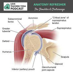 Bursitis Bursitis is inflammation of a bursa, […] Shoulder Bursitis Treatment, Bursitis Shoulder, Shoulder Joint, Yoga Podcast, Shoulder Anatomy, Scapula, Shoulder Injuries, Frozen Shoulder, Rotator Cuff