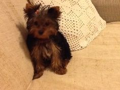 Nininha fazendo pose... |Pinned from PinTo for iPad|