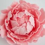 How to make a gum paste peony {part 2}