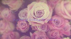 #faerietalesofviolette #roses #filmstill