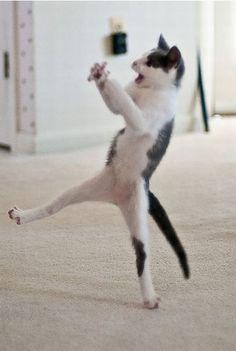 Dancing Gangnam style. lol