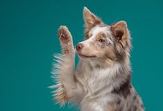Teaching your dog tricks is a great way of building a brilliant bond with your dog whilst having lots of fun with them! Tricks can also help your dog learn Cool Dog Tricks, Teach Dog Tricks, Flea And Tick Spray, Itchy Dog, Dog Nail Clippers, Dog Nails, Rat Terriers, Training Your Dog, Fleas