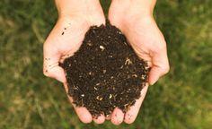 Guia da compostagem: recicle todo resíduo orgânico da sua casa de maneira sustentável