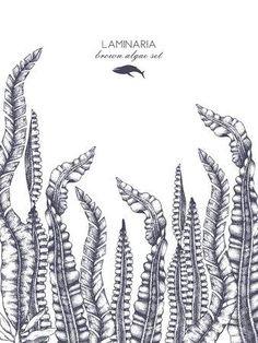 Ink hand drawn laminaria sketch, sweet sea tangle, japan kelp, alaria, set on white background. Vector illustration of highly detailed brown algae. Coral Drawing, Sea Drawing, Illustration, Kelp Forest, Drawings, Sea Illustration, Art, Ink, How To Draw Hands