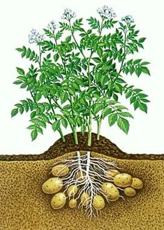 ... FULL ARTICLE @ http://wowthatsmygarden.com/organic-gardening-basics-ideas-to-get-started/