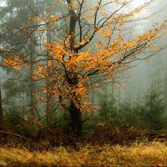 *🇷🇺 Foggy autumn (Russia) by Olga Rumyantseva 🍂 Landscape Photos, Landscape Art, Landscape Paintings, Landscape Photography, Wooded Landscaping, Winter Painting, Autumn Scenery, Watercolor Landscape, Pictures To Paint