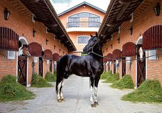 www.raphaelmacek.com  Raphael Macek - Horse Photography