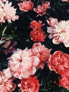 red + pink florals