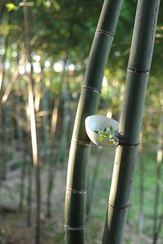 ギャラリー | 花匠 佐々木直喜 Ikebana, Japanese Art, Bird Feeders, Flower Arrangements, Oriental, Bamboo, Wallpaper, Floral, Outdoor Decor