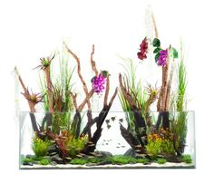 Fantasy-aquascape by the Aquarium Design Group