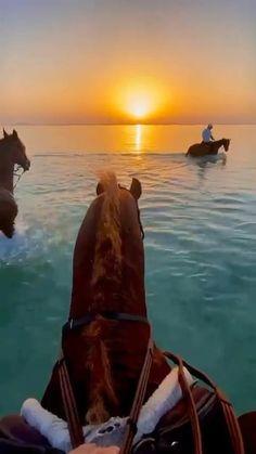 Cute Horses, Pretty Horses, Horse Love, Beautiful Horses, Beautiful Places To Travel, Best Places To Travel, Cool Places To Visit, Horse Girl Photography, Nature Photography