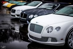 Bentley.     And this one to, the white,   HOME JAMES