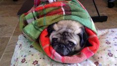 why are you looking at me like a burrito? huh?