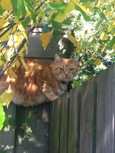Finn ist ein Herbstkater Red Cat, Animals, Autumn, Animales, Animaux, Animal, Animais