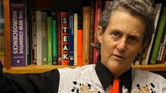 """Great Video: """"I'm pure geek, pure logic,"""" says Temple Grandin, author of many books on animal welfare and on autism. When Grandin is not on the road for speaking engagements, she can be found in the Animal Sciences Building at Colorado State University in Fort Collins--where she is a professor and scientist. We visited Grandin in her office to hear about her life and work, and to see which office ornaments will accompany her when the department moves to its new building on campus."""