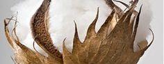 Yumeko - eco dekbedden, eco kussens en eco bedlinnen