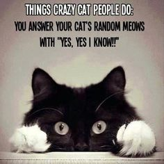 "Things Crazy Cat People Do: You Answer Your Cat's Random Meows With ""Yes, Yes I know!"" Or meow back"