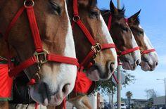 Whiskey fer my men and beer fer my horsess