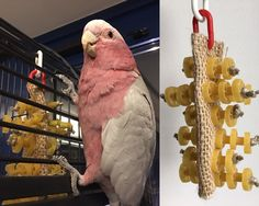 Parrot toy made with pasta and natural fibers woven