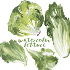 Watercolor lettuce lettuce clip art salad clipart veggie clipart culinary clip art food clipart hot chicken salad recipe with french fried onions water chestnuts simply delish! Corel Painter, Art Aquarelle, Watercolor Paintings, Watercolor Ideas, Photoshop Elementos, Food Illustrations, Illustration Art, Food Clipart, Clip Art