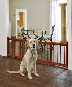 Take a look at this Expandable Pet Gate by Etna Products on #zulily today!