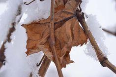 Winter im Wingert #Wein #wine #winter #pfalz #winelover