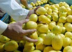 Rechazados en la UE cuatro lotes de limón turco por superar los límites de clorpirifos, según Ailimpo