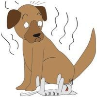 What to do about pet odors in the home Pet Odor Remover, Pet Odors, Dog Houses, Animal Design, Dog Art, Pet Shop, Pet Care, Dog Love, Animals And Pets