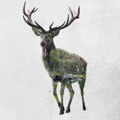 animales-doble-exposicion-cinemagraph-02