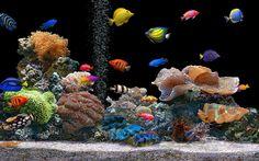 Download Live Hd Wallpaper Fish Aquarium 3d Desktop Aquarium 3d