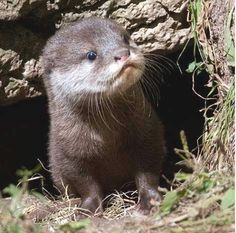 Baby Otter at https://www.facebook.com/#!/animalsareawesomepictures