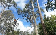 Landscape Gardening and Tree Surgeon: Make Your Garden Look Compact and Beautiful with Tree Surgeons