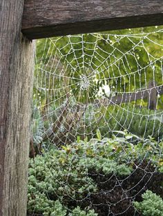 Remember Charlotte ! The spiders that build webs out in the open are your friend (non-poisonous). They will eat the misquotes in your yard.   Poisonous spiders hide in dark places!