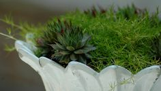suggested plant list for miniature fairy gardens