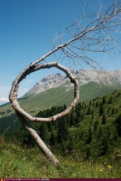 Loopy Tree