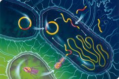 Both animals and bacteria require iron to live and grow. In the arms race between parasite and host, we have evolved ways to withhold iron from invaders.