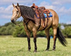 American Quarter Horse, All About Horses, Horse Tack, Beautiful Horses, Animals, Donkey, Pretty Horses, Animales, Animaux