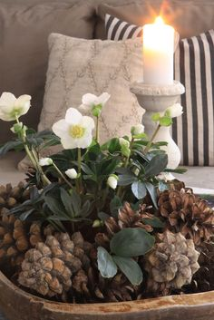 pine cones, helleborus and candle - pretty Christmas arrangement Christmas Flowers, Noel Christmas, All Things Christmas, Winter Christmas, Christmas Crafts, Xmas, Simple Christmas, Pine Cone Decorations, Christmas Decorations