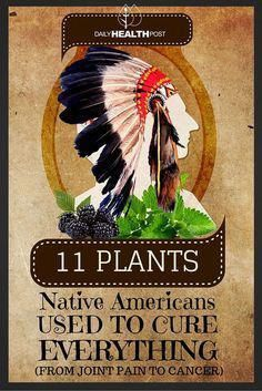 11 plants native Americans used to cure everything (from joint pain to cancer). So many uses for these all natural remedies. And much healthier than over-the-counter medicines! Natural Health Remedies, Natural Cures, Natural Healing, Herbal Remedies, Natural Treatments, Natural Oil, Holistic Healing, Natural Foods, Holistic Remedies