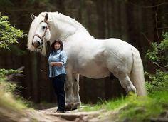 BIG draft horse!