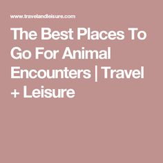 The Best Places To Go For Animal Encounters | Travel + Leisure