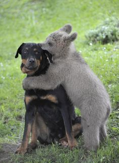bear and puppy...TOO CUTE
