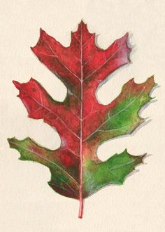 Fall Oak Leaf Art Print of Watercolor Painting on Etsy, $4.75