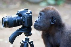 Amazing Animal Photography Prize 2012 from ZSL
